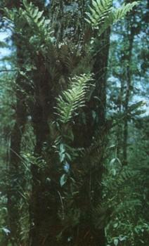 Видов папоротниками орхидеями и др
