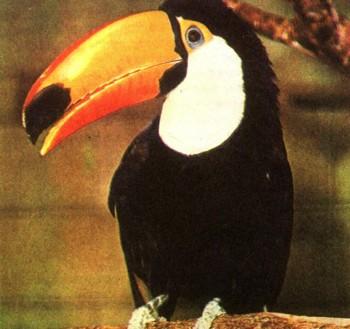 clow ru Растения и животные Энциклопедия растений и животных  Центральная и Южная Америка
